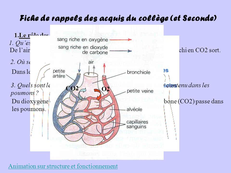 Fiche de rappels des acquis du collège (et Seconde) 1.Le rôle des poumons 1. Quest ce qui rentre dans les poumons et quest ce qui en sort ? De lair re