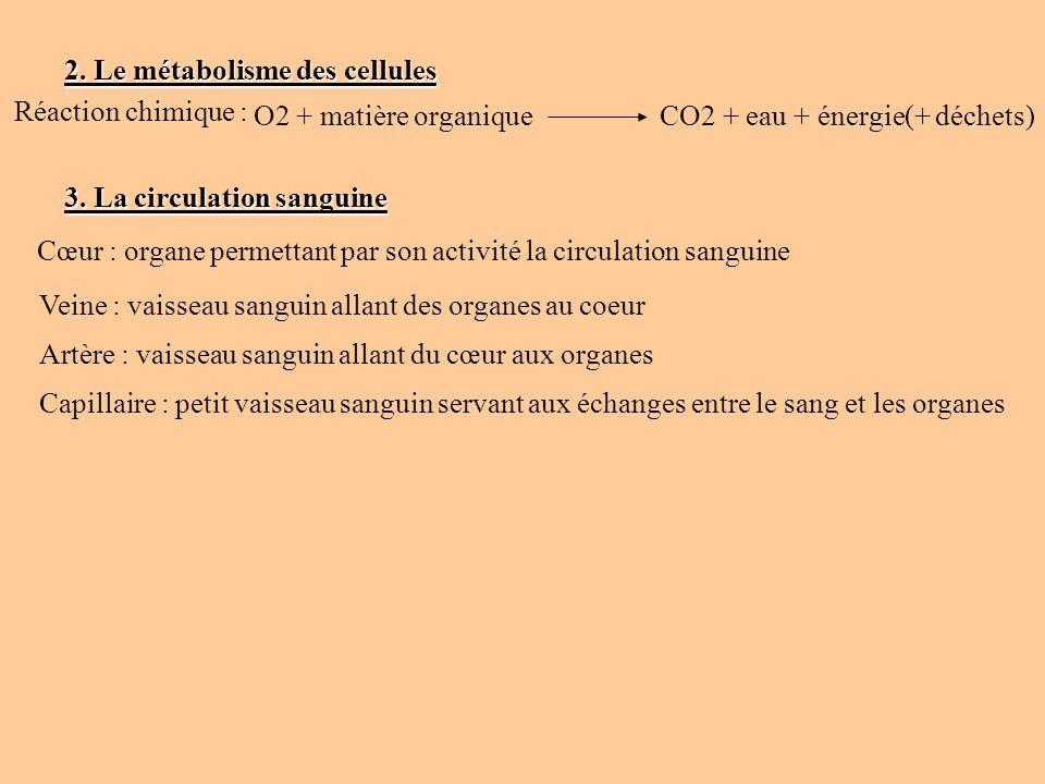 2. Le métabolisme des cellules Réaction chimique : O2 + matière organique CO2 + eau + énergie(+ déchets) 3. La circulation sanguine Cœur : organe perm