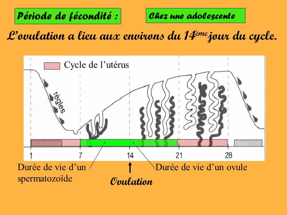 Période de fécondité : Lovulation a lieu aux environs du 14 ème jour du cycle. Cycle de lutérus Ovulation Durée de vie dun ovuleDurée de vie dun sperm