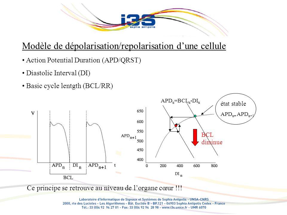 Le comportement cellulaire les intervalles/ondes cardiaques R-R (influence sympathique/parasympathique sur le nœud SA) P-R (influence sympathique/parasympathique sur le nœud AV) Q-T (adaptation cellulaire rapide et lente) T-wave alternans (oscillation cellulaire)