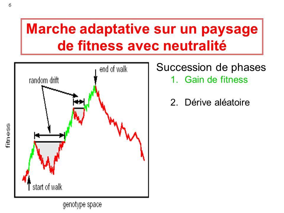 6 Marche adaptative sur un paysage de fitness avec neutralité Succession de phases 1.Gain de fitness 2.Dérive aléatoire
