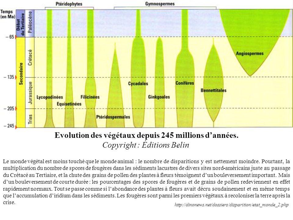 Evolution des végétaux depuis 245 millions dannées. Copyright : Éditions Belin Le monde végétal est moins touché que le monde animal : le nombre de di
