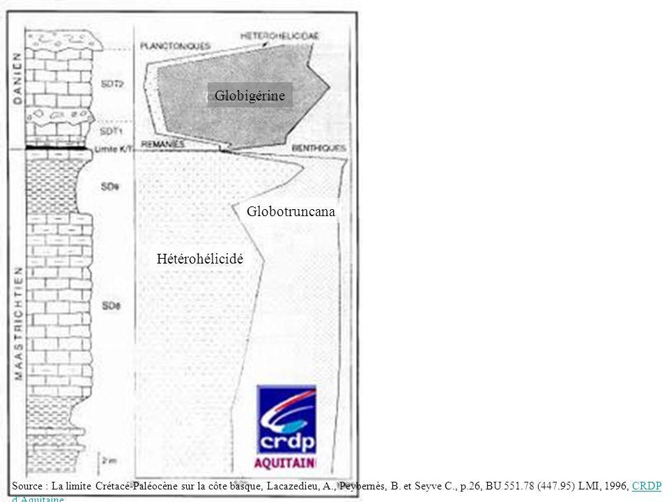 Globotruncana Hétérohélicidé Globigérine Source : La limite Crétacé-Paléocène sur la côte basque, Lacazedieu, A., Peybernès, B. et Seyve C., p.26, BU