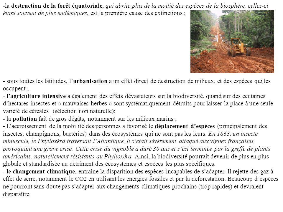 -la destruction de la forêt équatoriale, qui abrite plus de la moitié des espèces de la biosphère, celles-ci étant souvent de plus endémiques, est la