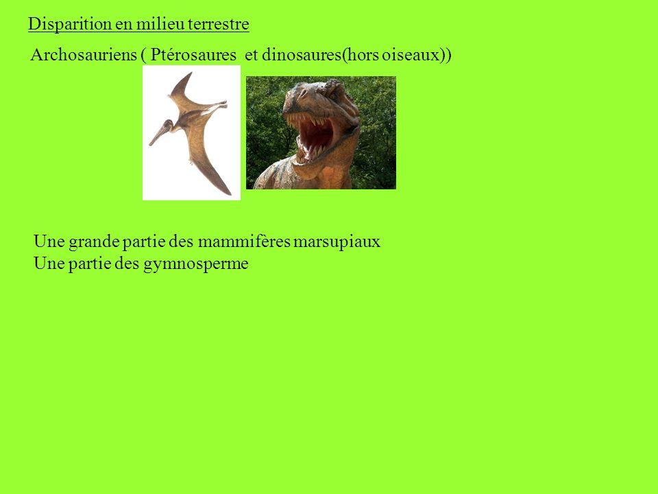 Disparition en milieu terrestre Archosauriens ( Ptérosaures et dinosaures(hors oiseaux)) Une grande partie des mammifères marsupiaux Une partie des gy