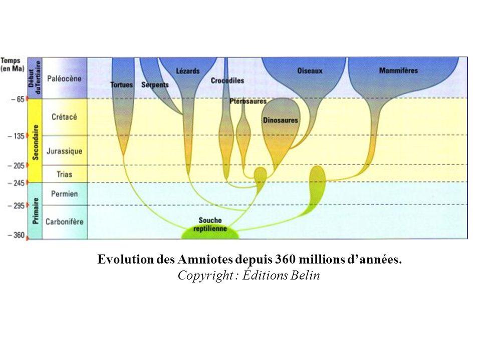Evolution des Amniotes depuis 360 millions dannées. Copyright : Éditions Belin