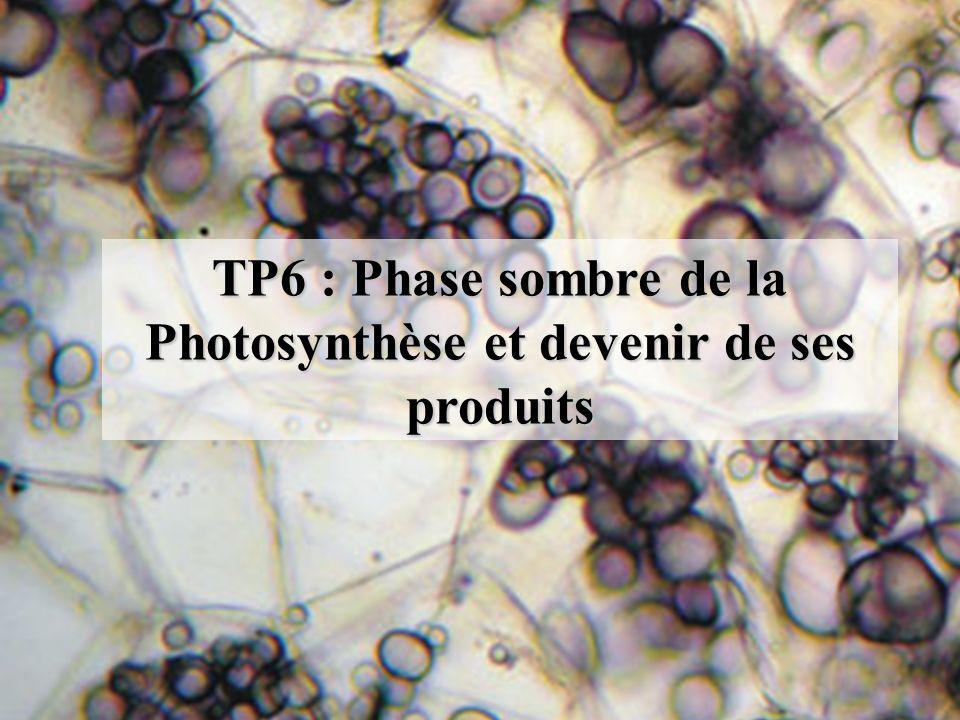 TP6 : Phase sombre de la Photosynthèse et devenir de ses produits