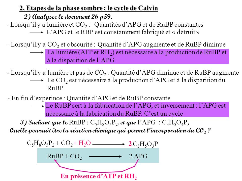 2. Etapes de la phase sombre : le cycle de Calvin 2) Analyser le document 26 p59. 3) Sachant que le RuBP : C 5 H 8 O 5 P 2, et que lAPG : C 3 H 5 O 4