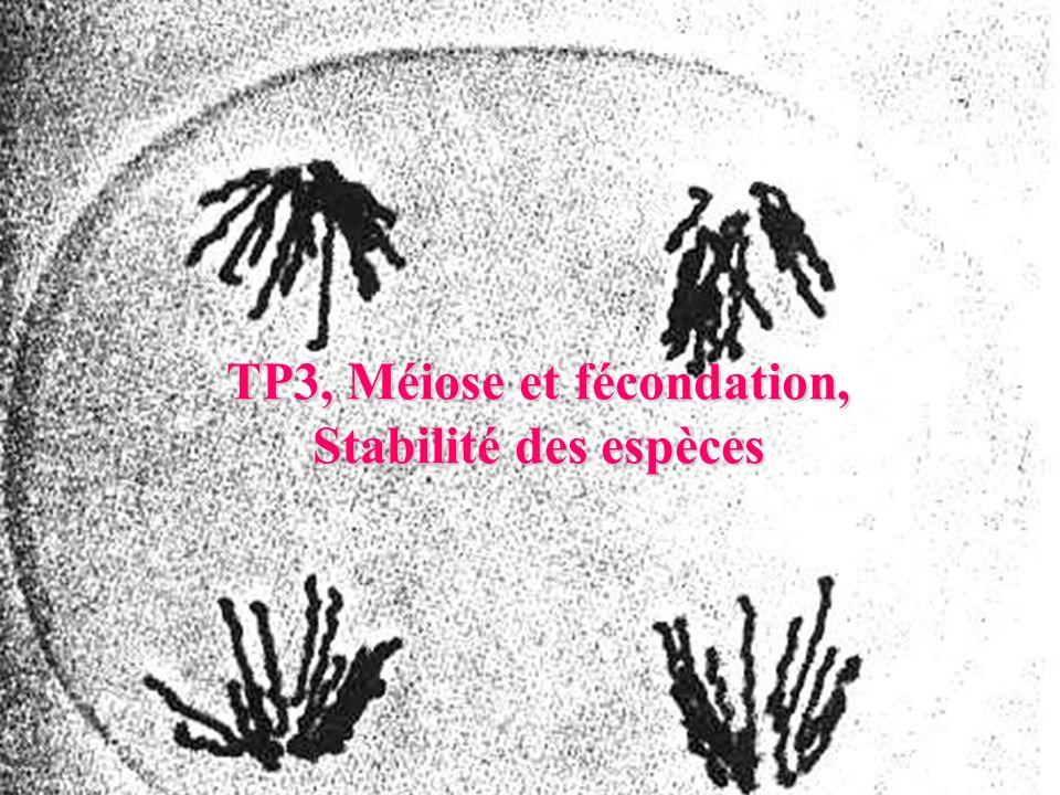 TP3, Méiose et fécondation, Stabilité des espèces