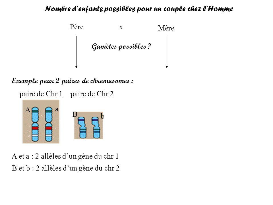 Père Mère x Gamètes possibles ? Exemple pour 2 paires de chromosomes : paire de Chr 1 paire de Chr 2 A et a : 2 allèles dun gène du chr 1 B et b : 2 a