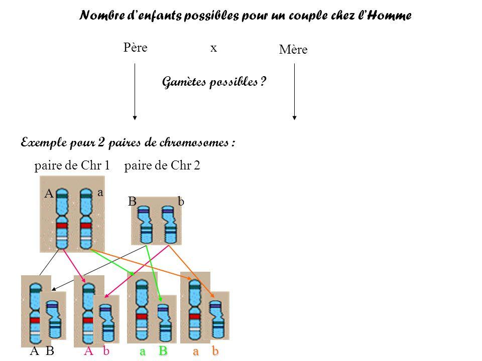 Père Mère x Gamètes possibles ? Exemple pour 2 paires de chromosomes : paire de Chr 1 paire de Chr 2 A a Bb A BA b a B a b Nombre denfants possibles p