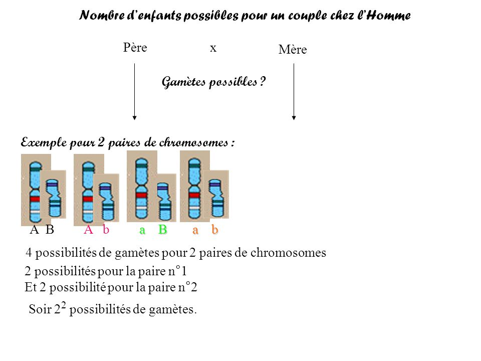 Père Mère x Gamètes possibles ? Exemple pour 2 paires de chromosomes : A BA b a B a b 4 possibilités de gamètes pour 2 paires de chromosomes 2 possibi
