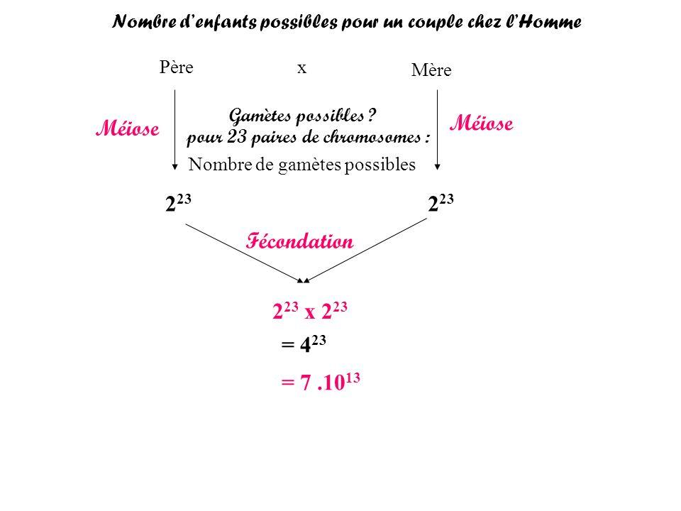 Père Mère x Gamètes possibles ? pour 23 paires de chromosomes : Nombre de gamètes possibles 2 23 Méiose Fécondation 2 23 x 2 23 = 4 23 = 7.10 13 Nombr