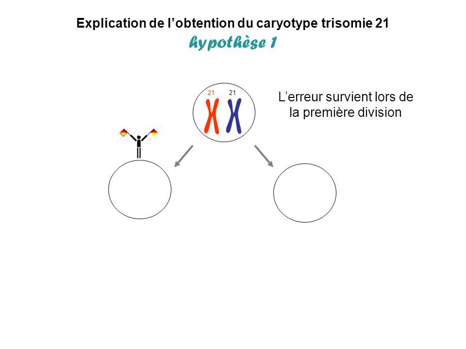 Explication de lobtention du caryotype trisomie 21 hypothèse 1 21 Lerreur survient lors de la première division