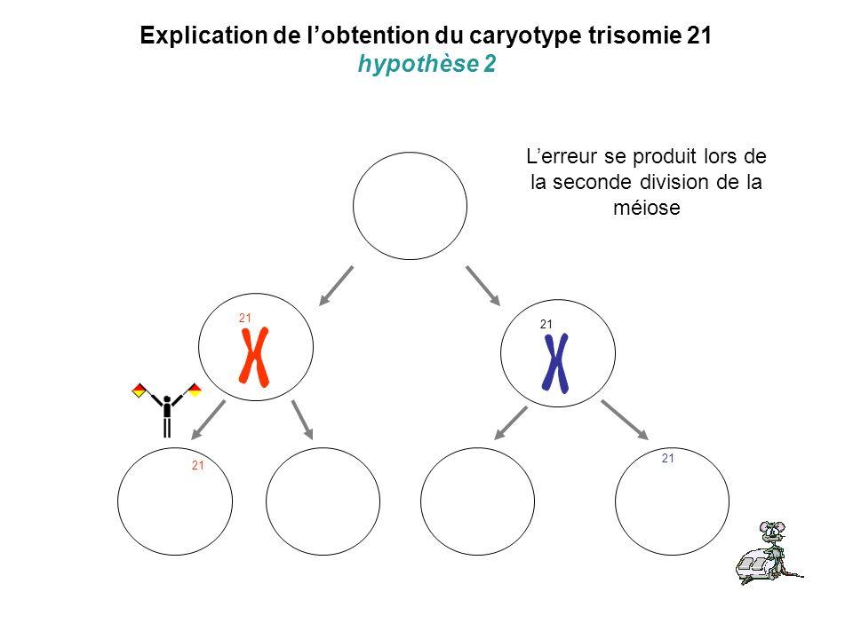 Explication de lobtention du caryotype trisomie 21 hypothèse 2 21 Lerreur se produit lors de la seconde division de la méiose