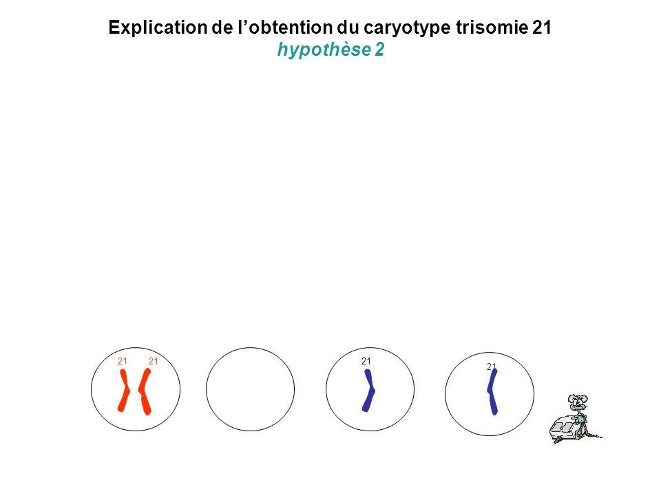 Explication de lobtention du caryotype trisomie 21 hypothèse 2 21