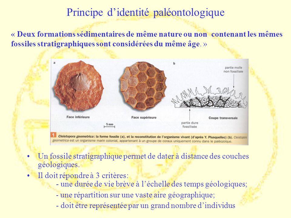 Principe didentité paléontologique Un fossile stratigraphique permet de dater à distance des couches géologiques. Il doit répondre à 3 critères: - une