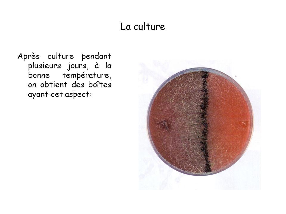 La culture Après culture pendant plusieurs jours, à la bonne température, on obtient des boîtes ayant cet aspect: