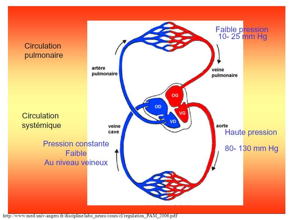 Mesure de la pression artérielle (p216):