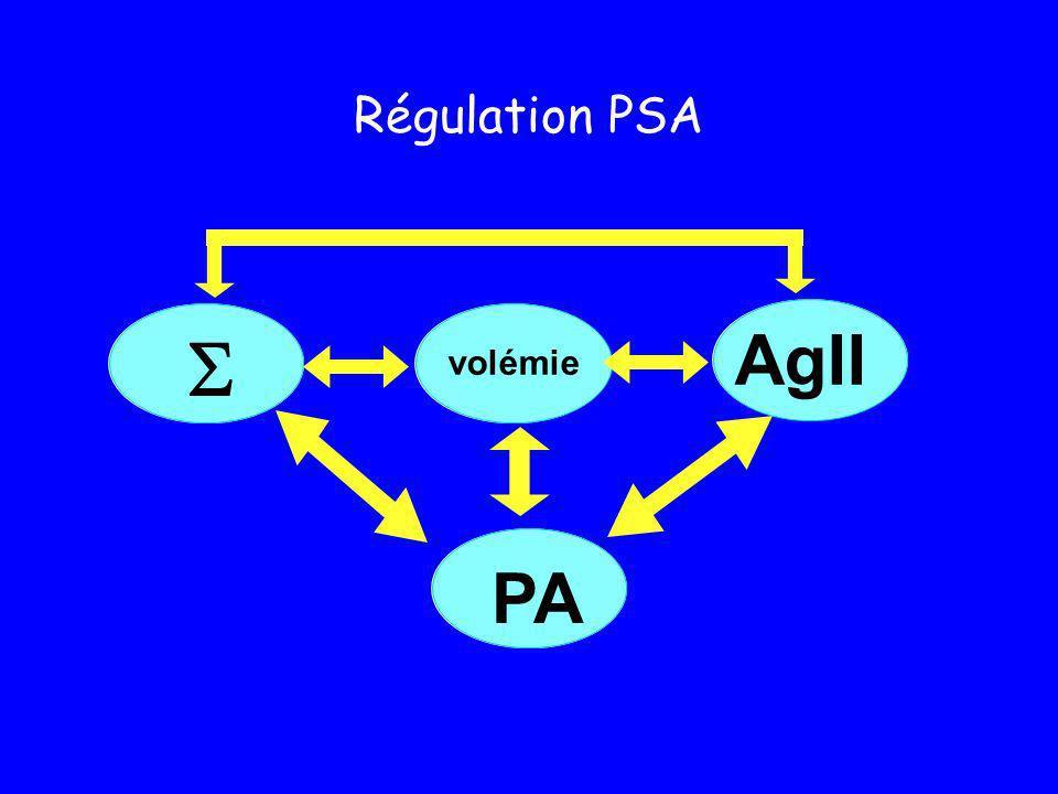 IEC (A.R.A.) PA volémie AgII réponse vasoconstrictive NORADRENALINE
