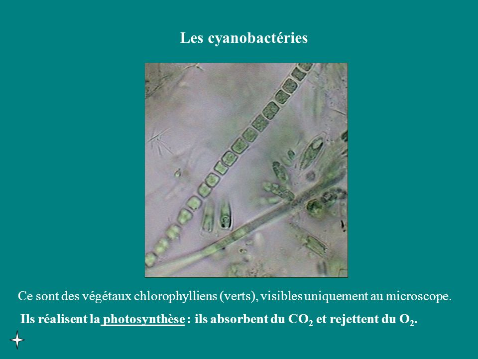 Terre Rayonnement solaire total Rayonnement réfléchi Absorption et émission dinfrarouges Gaz à effet de serre : CO 2, H 2 O, O 3, CH 4 Emission dinfrarouges vers lespace, chaleur perdue.