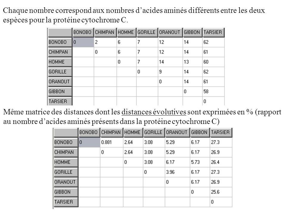 Chaque nombre correspond aux nombres dacides aminés différents entre les deux espèces pour la protéine cytochrome C. Même matrice des distances dont l