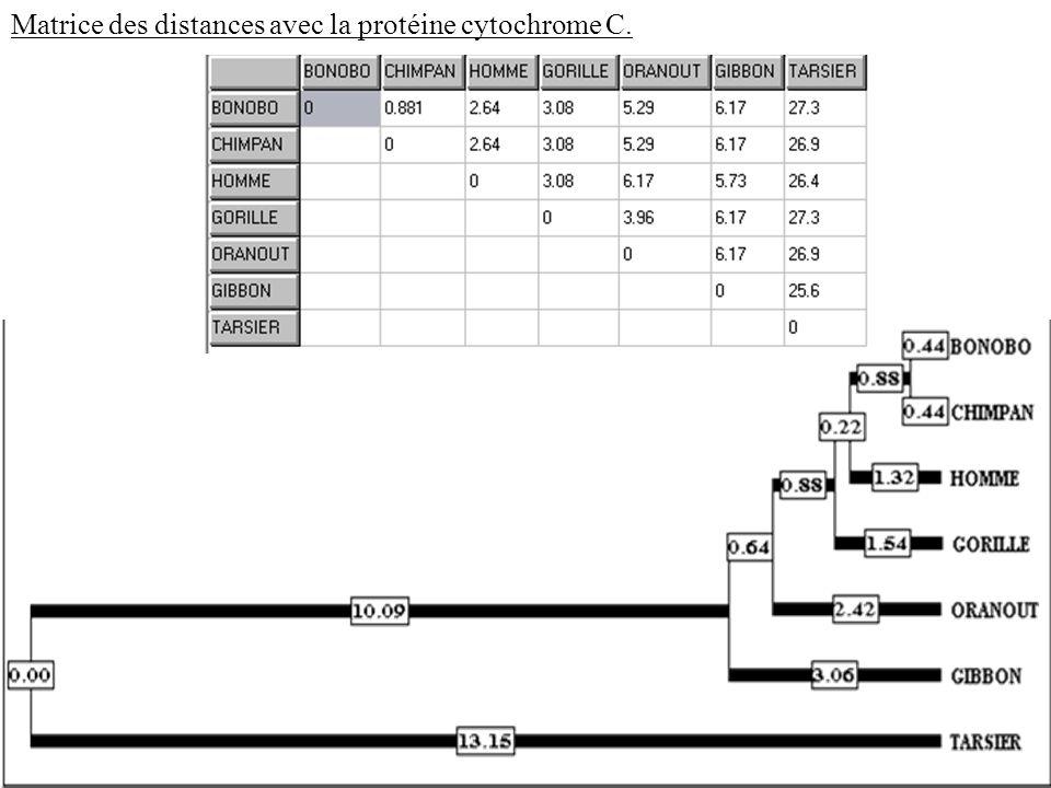Matrice des distances avec la protéine cytochrome C.