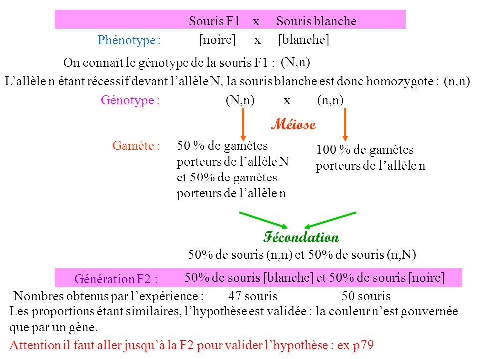 Fécondation 50% de souris (n,n) et 50% de souris (n,N) Génération F2 : 50% de souris [blanche] et 50% de souris [noire] Nombres obtenus par lexpérienc