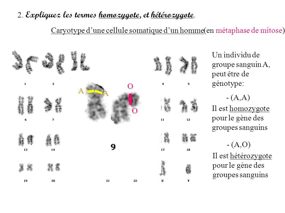 2. Expliquez les termes homozygote, et hétérozygote. Caryotype dune cellule somatique dun homme Un individu de groupe sanguin A, peut être de génotype