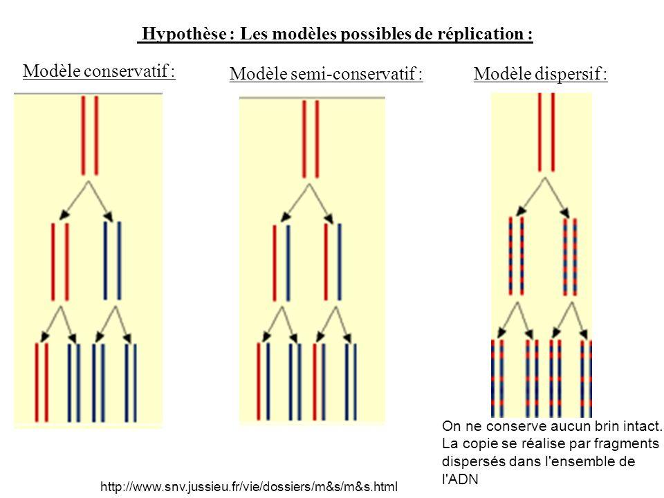 Hypothèse : Les modèles possibles de réplication : Modèle conservatif : Modèle semi-conservatif :Modèle dispersif : http://www.snv.jussieu.fr/vie/doss