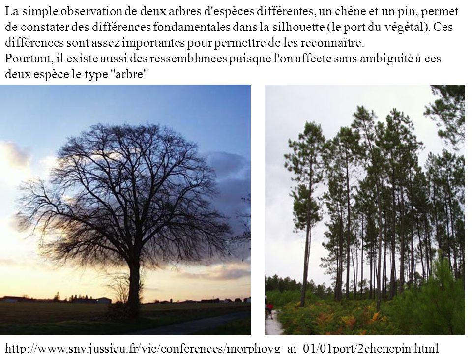 La simple observation de deux arbres d'espèces différentes, un chêne et un pin, permet de constater des différences fondamentales dans la silhouette (