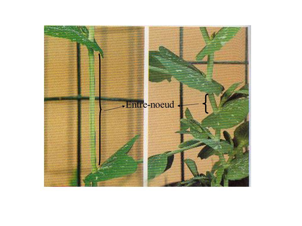 Des plantes dune même espèce au développement différent - même espèce - même environnement Pied normalPied nain + acide gibbérellique Allèle normalAllèle nain