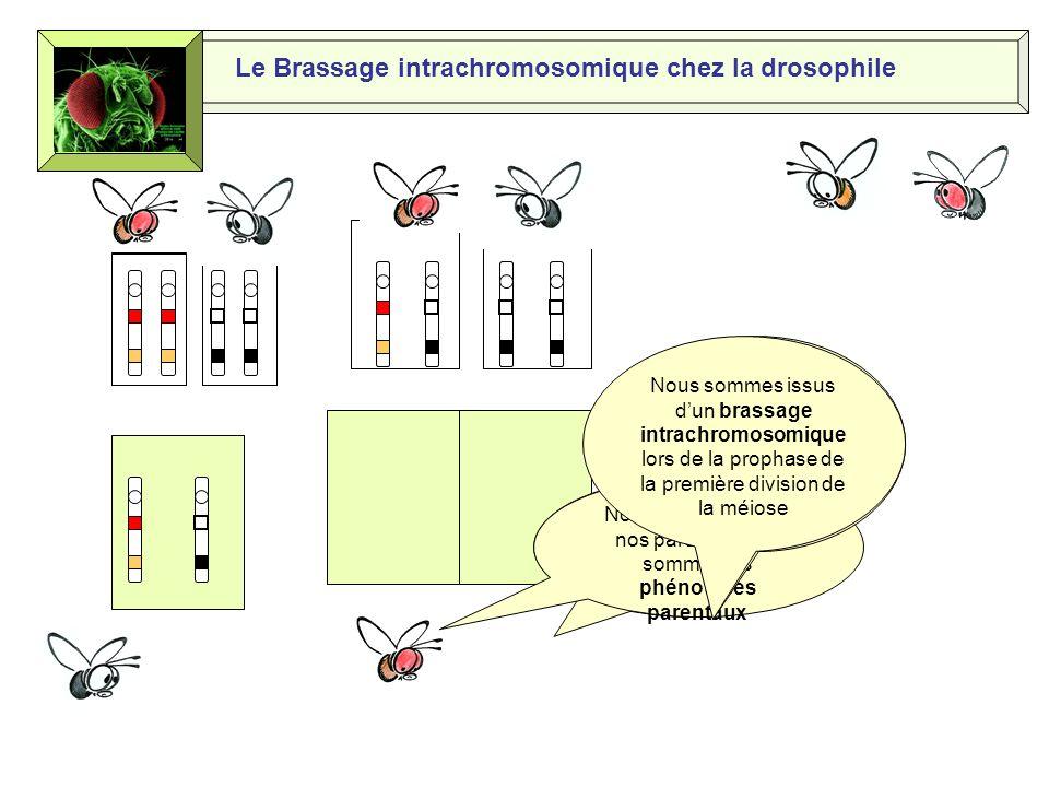 Si on faisait un test-cross Le Brassage intrachromosomique chez la drosophile OK, ça tombe bien, je suis homozygote double récessif