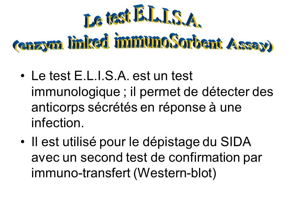 Le test E.L.I.S.A. est un test immunologique ; il permet de détecter des anticorps sécrétés en réponse à une infection. Il est utilisé pour le dépista