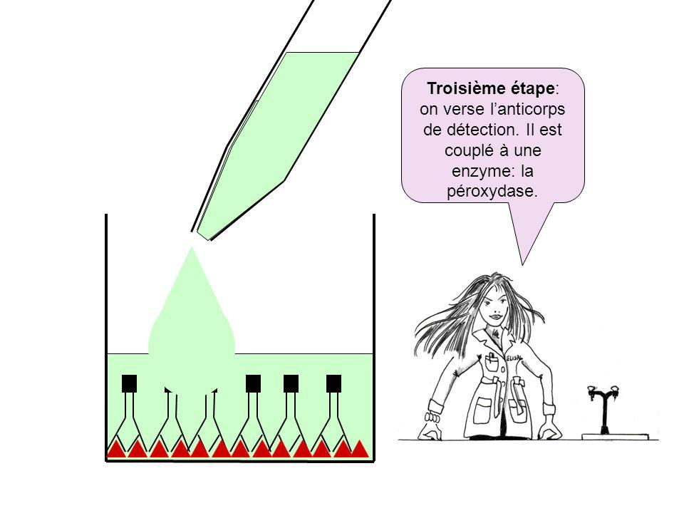 Troisième étape: on verse lanticorps de détection. Il est couplé à une enzyme: la péroxydase.