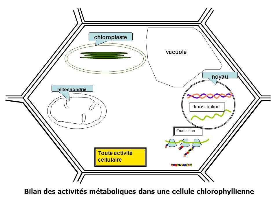 Bilan des activités métaboliques dans une cellule chlorophyllienne Toute activité cellulaire mitochondrie Traduction noyau transcription chloroplaste vacuole