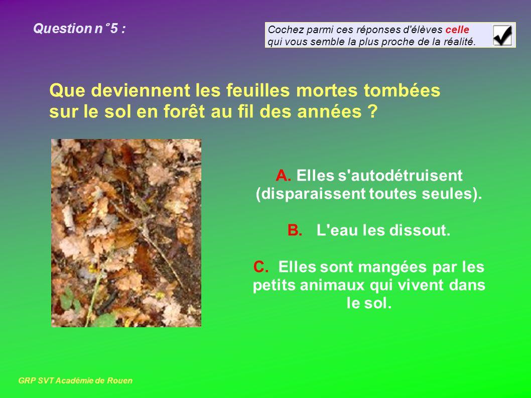 Question n° 5 : Que deviennent les feuilles mortes tombées sur le sol en forêt au fil des années .