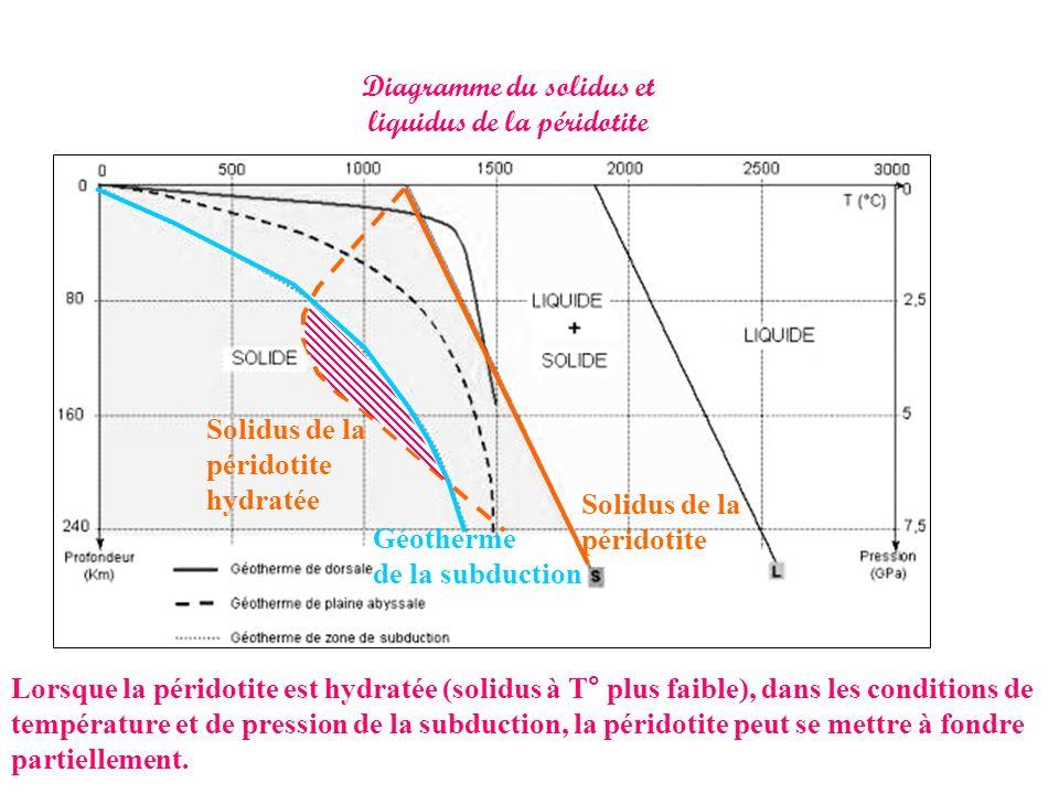 Diagramme du solidus et liquidus de la péridotite Solidus de la péridotite Géotherme de la subduction Lorsque la péridotite est hydratée (solidus à T°