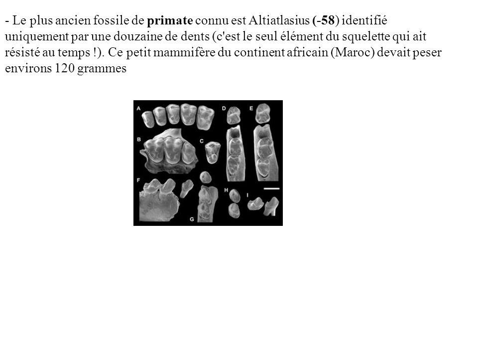 - Le plus ancien fossile de primate connu est Altiatlasius (-58) identifié uniquement par une douzaine de dents (c'est le seul élément du squelette qu
