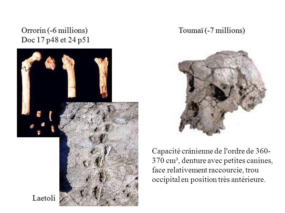 Orrorin (-6 millions) Doc 17 p48 et 24 p51 Toumaï (-7 millions) Capacité crânienne de l'ordre de 360- 370 cm³, denture avec petites canines, face rela