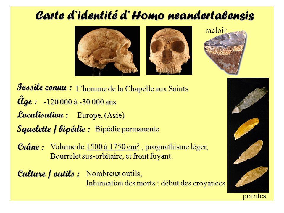 Carte didentité d Homo neandertalensis Fossile connu : Localisation : Âge : Squelette / bipédie : Crâne : Culture / outils : -120 000 à -30 000 ans Eu