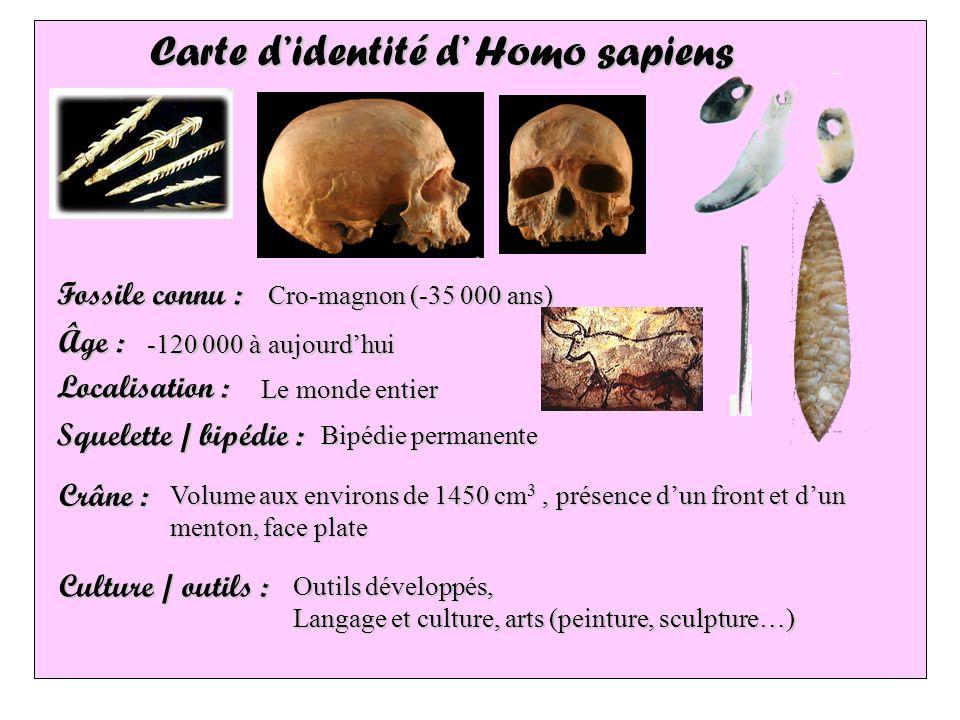 Carte didentité d Homo sapiens Fossile connu : Localisation : Âge : Squelette / bipédie : Crâne : Culture / outils : Le monde entier Bipédie permanent