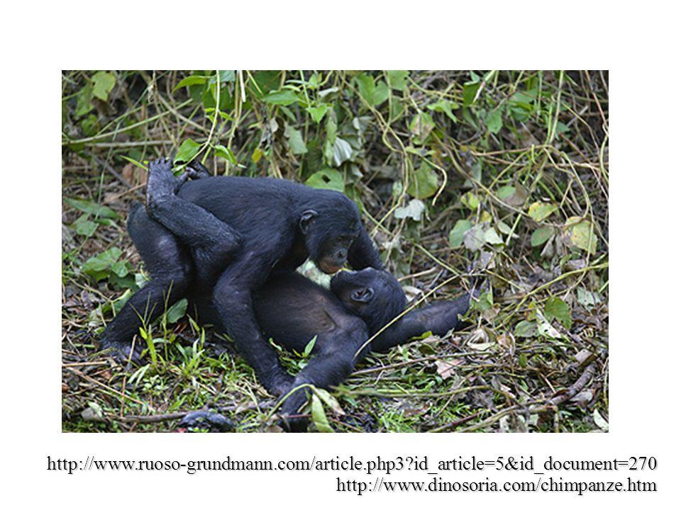 http://www.dinosoria.com/chimpanze.htm http://www.ruoso-grundmann.com/article.php3?id_article=5&id_document=270