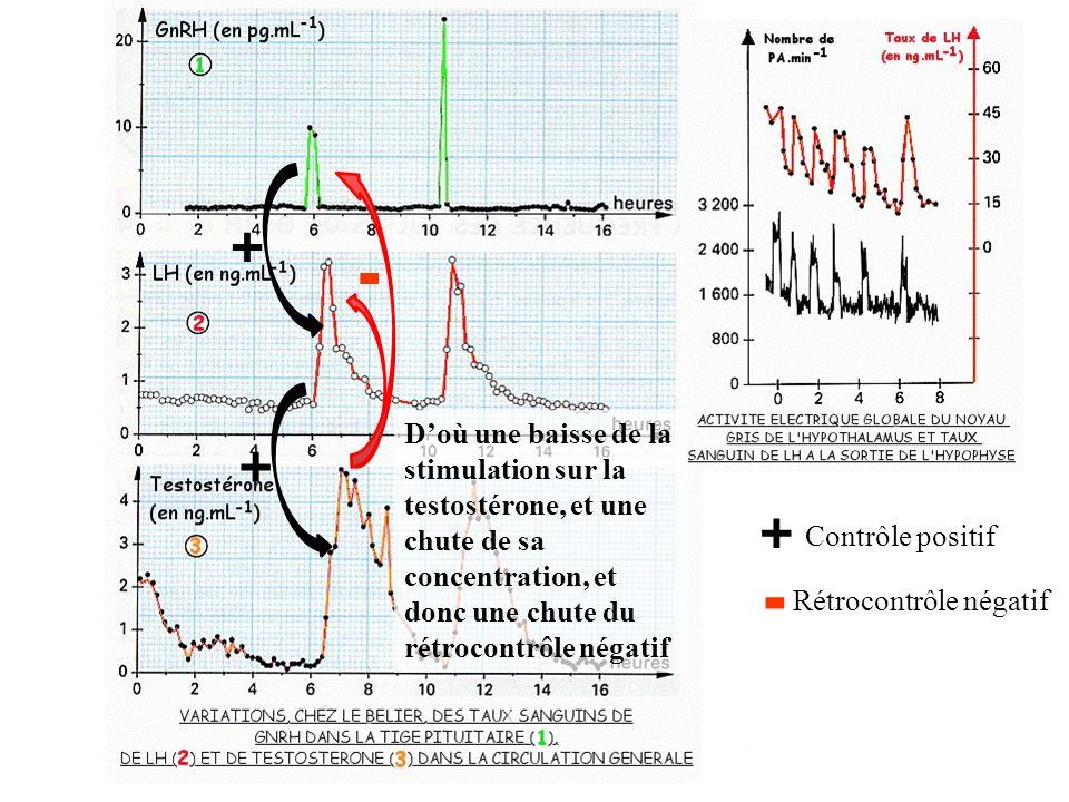 + + + Contrôle positif - - Rétrocontrôle négatif Doù une baisse de la stimulation sur la testostérone, et une chute de sa concentration, et donc une chute du rétrocontrôle négatif