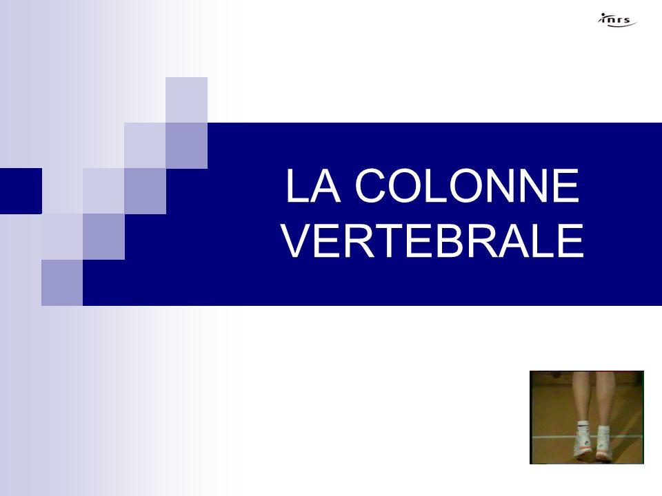 LA COLONNE VERTEBRALE