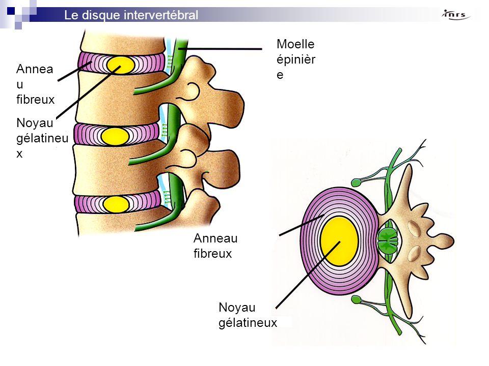 Le disque intervertébral Annea u fibreux Noyau gélatineu x Moelle épinièr e Anneau fibreux Noyau gélatineux