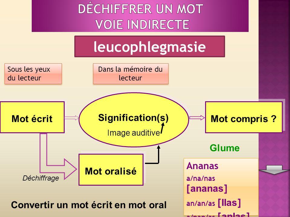 Sous les yeux du lecteur Dans la mémoire du lecteur Mot écrit Signification(s) Image auditive Signification(s) Image auditive Mot compris .
