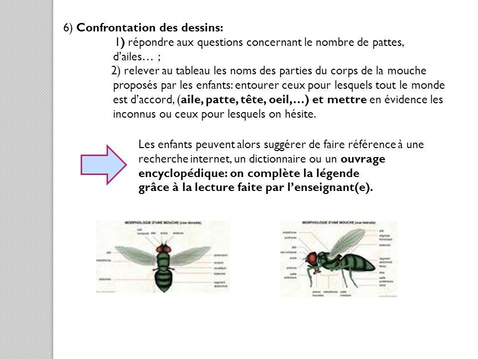 6) Confrontation des dessins: 1) répondre aux questions concernant le nombre de pattes, dailes… ; 2) relever au tableau les noms des parties du corps