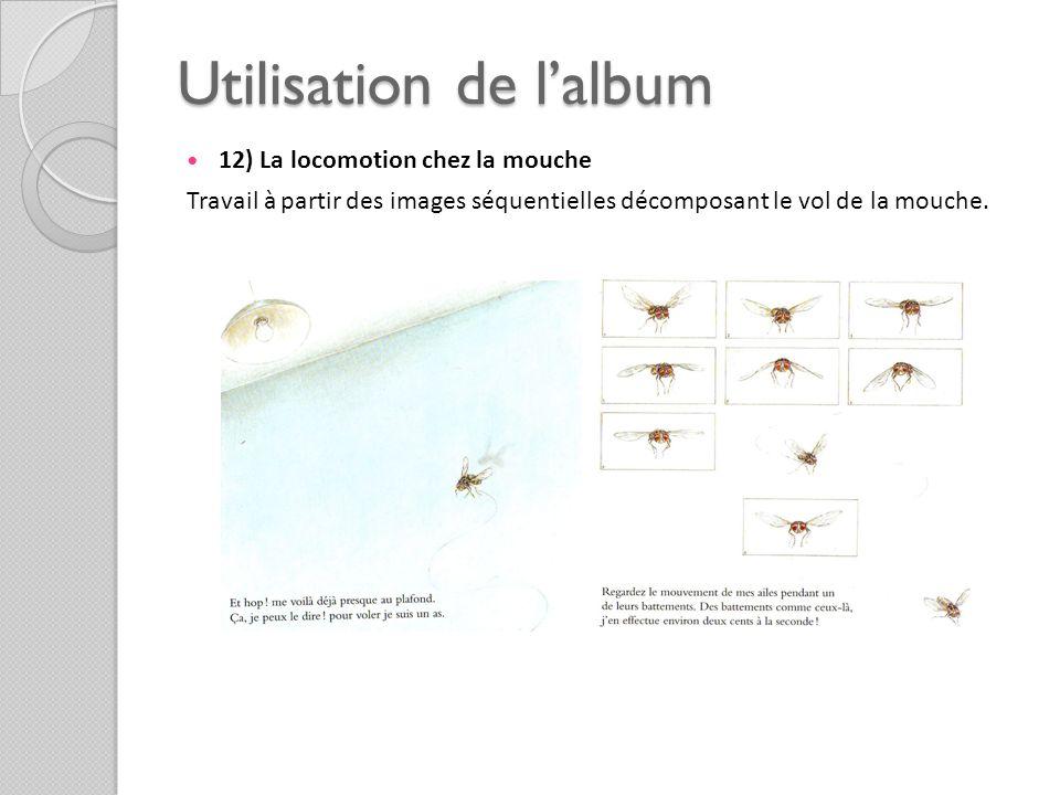 Utilisation de lalbum 12) La locomotion chez la mouche Travail à partir des images séquentielles décomposant le vol de la mouche.
