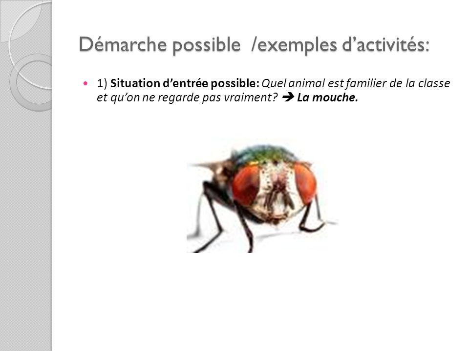 Démarche possible /exemples dactivités: 1) Situation dentrée possible: Quel animal est familier de la classe et quon ne regarde pas vraiment? La mouch